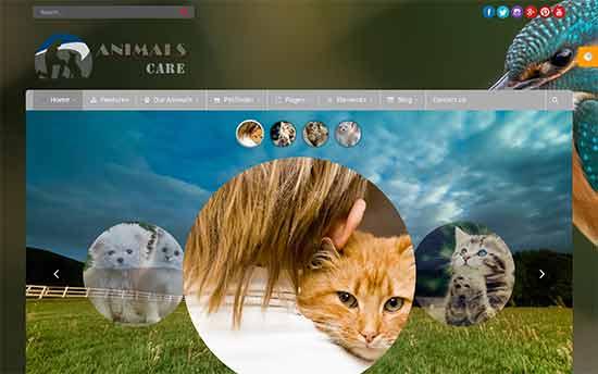 Chăm sóc động vật